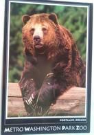 Metro Washington Park Zoo Grizzly Bear - Portland