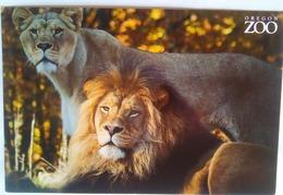 Oregon Zoo Lions - Portland