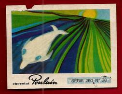Chromo Image Chocolat Poulain Série 260 N° 36 Oum Le Dauphin - Poulain