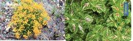 2 Télécartes Brésil Brazil  Fleur Flower  Phonecard (D 674) - Fleurs