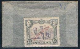 Nyassa 51 Unused Camels 1911 CV 1.00 (N0472) - Nyassa