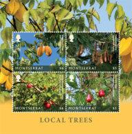 Montserrat 2018 Local Trees ,fruits   I201901 - Montserrat