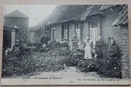 Alost - Aalst - La Cueillette Du Houblon - Vve Cornélis 46 Rue Longue De Sel Alost - Circulé: 1913 - 2 Scans - Aalst
