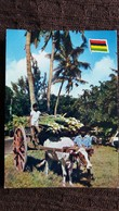 CPSM ILE MAURICE RECOLTE DE LA CANNE A SUCRE MAURITIUS ISLE DE FRANCE 6872 ATTELAGE - Postcards