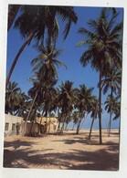 OMAN - AK 354851 Salalah - Coconut Palms - Oman