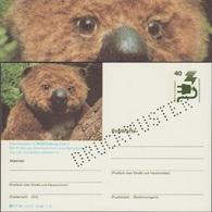 Allemagne 1976. Carte Postale, Entier Spécimen. Espèces Menacées, Le Koala D'Australie Du Sud - Other