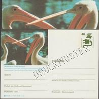 Allemagne 1976. Carte Postale, Entier Spécimen. Jardin Zoologique De Stuttgart. Pélicans, Mâle Et Femelle - Pélicans