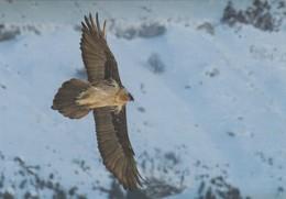 CPM AIGLE EAGLE - Birds