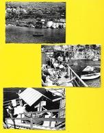 Marina Di Massa Lubrense (Sorrento) Ristorante 1955 Italie - Orte