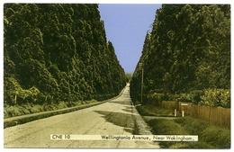 REDWOOD TREE : WELLINGTONIA AVENUE, NEAR WOKINGHAM, ENGLAND - Trees