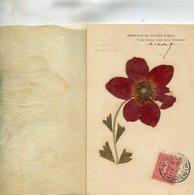 FLEUR SECHEE(ANEMONE) - Flores