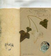 FLEUR SECHEE(LIERRE) - Flores