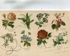 FLEUR - Flores