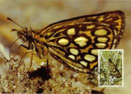 5279  Papillon Miroir: Carte Maximum 1989 -  Large Chequered Skipper Maximum Card From Jersey. WWF - Butterflies