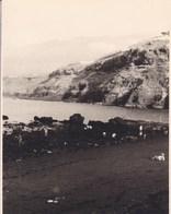 TENERIFE PUERTO De La CRUZ MARTIANEZ 1956 Photo Amateur Format Environ 7,5 Cm X 5,5 Cm - Lugares