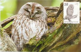 Chouette Hulotte De Taiwan, Carte-maximum De Taiwan - Owls
