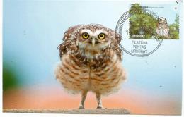 Petit-duc Choliba D'Uruguay , Carte-maximum D'Uruguay - Owls