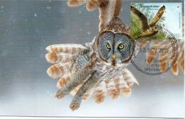 Hibou Des Marais D'Uruguay , Carte-maximum D'Uruguay - Owls