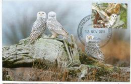 L'Effraie Des Clochers D'Uruguay , Carte-maximum D'Uruguay - Owls