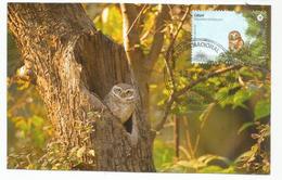 Chouette Pygmée Ferrugineuse D'Uruguay , Carte-maximum D'Uruguay - Owls