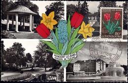 1955 Tulipe Cultivée, Gartentulpe, Tulipa Gesneriana, Mondorf Floralies, Michel: 531  80c. - Cartes Maximum