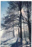 CONTRE LA LUMIÈRE 1 : Contre Jour Sur La Neige  : édit. Cap N° PP 3144 - Halt Gegen Das Licht/Durchscheink.