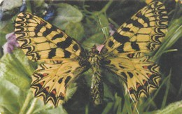 REPUBLICA CHECA. FAUNA - MARIPOSA. Butterfly Zerynthia Polyxena. C348, 60/11.00. (130) - Mariposas