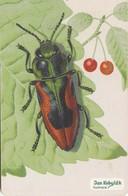 REPUBLICA CHECA. FAUNA - ESCARABAJO. Beetle Anthaxia Candens. C295, 60/11.99. (131) - Insectos