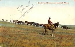 Cowboy And Horses, Near Macleod, Alberta (animation, 1908, Valentine & Sons) - Alberta
