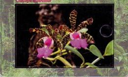 REPUBLICA CHECA. FLORA - ORQUIDEAS. Orchid Cattleya Aclandiae. C266, 03/01.99. (003) - Flores
