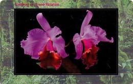 REPUBLICA CHECA. FLORA - ORQUIDEAS. Orchid Cattleya Cv. Irene Holguin. C267, 04/01.99. (004) - Flores