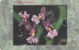 REPUBLICA CHECA. FLORA - ORQUIDEAS. Orchid Oncidium Cucullatum. C288A, 41/09.99. (140) - Flores