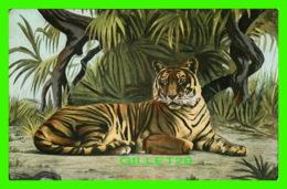 TIGRE - TIGER - PAUL C. KOEBER & CO - TRAVEL IN 1905 - UNDIVIDED BACK - - Tigres