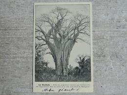 MADAGASCAR    LE BAOBAB - Madagascar