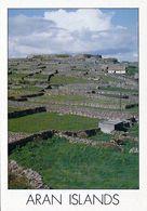 1 AK Irland Ireland * Steinwälle Auf Den Aran Islands * - Galway