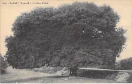 ARBRE Tree Bome Boom Albero árbol - 22 - ST CAST : Le Gros Chêne - CPA - Côtes D'Armor - Bäume