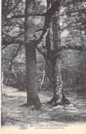 ARBRE Tree - 77 - FONTAINEBLEAU : Le CHENE CHARME Dans La Forêt - CPA - Bome Boom Albero árbol - Bäume