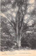 ARBRE Tree - 77 - FONTAINEBLEAU : Le Feu D'Artifice ( Mont Ussy ) Dans La Forêt - CPA - Bome Boom Albero árbol - Bäume