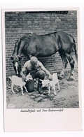 OOR-33   German Soldier Is Petting Some Goats - Guerra 1939-45