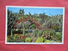 Cactus Garden     Ref 3429 - Cactusses