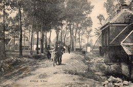 Appels   L'Yser. - Belgique