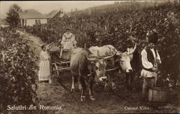 Cp Rumänien, Salutari Din Romania, Culesul Viilor, Ernte - Berufe