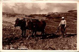 Lebanon Farmer A Ploughman 1955 - Lebanon
