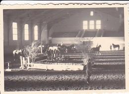 Foto Deutsche Soldaten Mit Pferden In Reithalle - Reitstunden -  2. WK - 8*5,5cm (42067) - Krieg, Militär