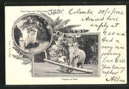 AK Ceylon, River Scene And Native Barge, Elephant At Work, Arbeitselefant - Elefanten
