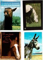 CHEVAUX -ÂNES /  Lot De 85 Cartes Postales Modernes écrites - Cartes Postales