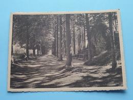 De Grot - La Grotte ( M. Belmans-Peeters ) Anno 1954 ( Zie / Voir Photo ) ! - Westerlo