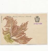 Superbe Carte Ecusson Cherbourg Originales Algues Marines Deposé M.D. Genuine Seeweed. Herbier - Cherbourg