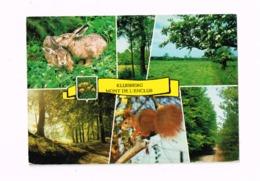 KLuisberg.Mont De L'Enclus.Multivues.Lapins,écureuil,arbres. - Kluisbergen
