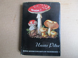 Unsere Pilze (Dr Werner Rauh) - Livres, BD, Revues
